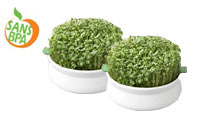 Lot de 2 coupelles de germination